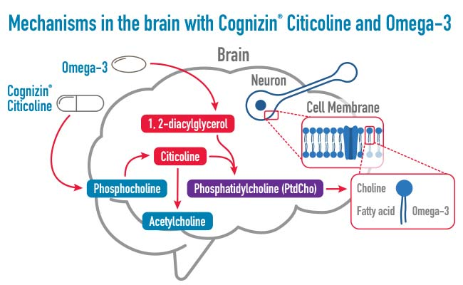 the brain with citicoline and Omega-3s
